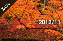 【ライブ情報】2012年11月