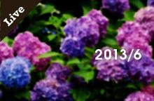 【ライブ情報】2013年6月