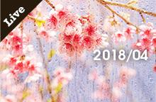 【ライブ情報】2018年 4月