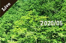 【ライブ情報】2020年 5月